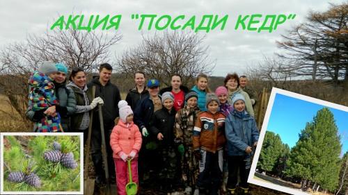 posadi-kedr-2016-dubovoe